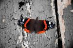 Butterfly by padlas