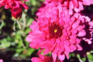 Summer Pink by ShelbyMelissa