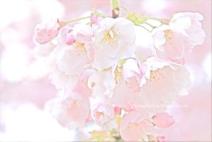 Cherry You Blossom by joiachi