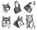Wolf Faces by MDTartist83