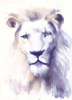 Noble lion by nienor