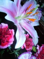 lillies. by mouthygyrl