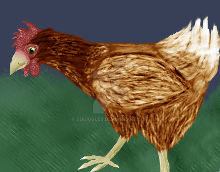 Chicken by Squiggle0