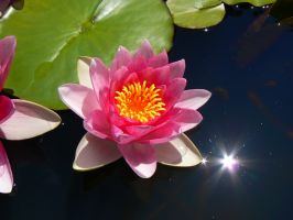 Waterlily by Azagh