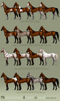 Moscovian Sport Horse Patterns by BH-Stables