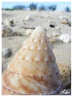 Shell by PKLdesigner
