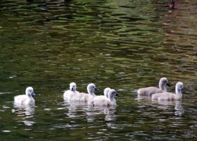 Signets by Mark-Allison