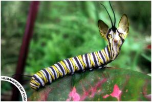 Caterpillar by HumanDescent