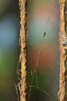 Spider Web by noirchile