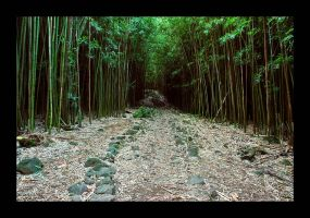 Bamboo Forest. by anonymous66