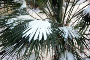 Frosty Palms by agamble07