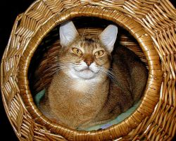 Foxy Cat In A Basket by Soniafm1027