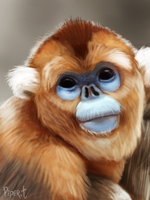DAY 63. Photo Study - Golden Monkey (30 Minutes) by Cryptid-Creations