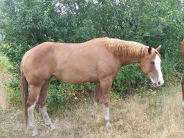 Horses 99 .:Stock:. by WesternStock