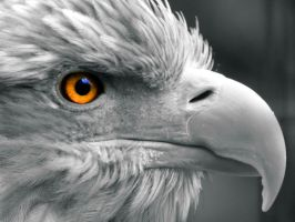 Eye of the-Eagle by Kaz-D
