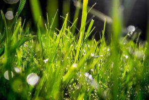 morning dew the second by DanielGliese
