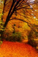 Herbst 02 by Anschi71