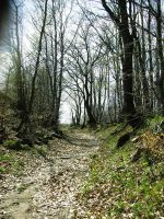 Road Through The Forest by ofeliq