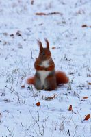 Squirrel Adventures [09] by OliverBPhotography