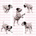 Dalmatian Puppies Stock 4 by Shoofly-Stock