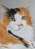 Pascha Cat in pastel by mo62