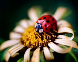 Lady Bird by DeniseSoden