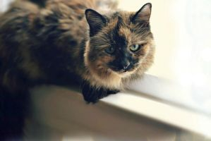 A Sweet Old Girl by suezn