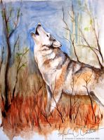 Lone Wolf Calling by Andagora