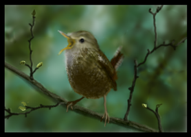 The little Wren by MacAodhagain