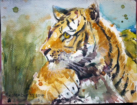 Tiger in Watercolour by beardrooler