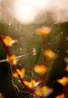 Spider on its web by AshiMonster