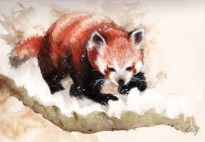 Red panda by yugie
