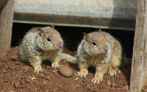 Baby squirrels by finhead4ever