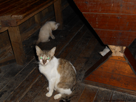 Restaurant cats _ 20150803a by K4nK4n