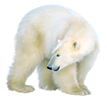 Polar bear. by PRUSSIAART