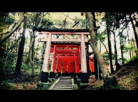Kyoto, Tori gates in a woods by Shreever