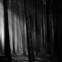 Forest BW by Seetho