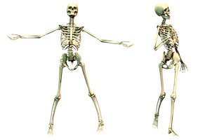 Spooky Skeleton 02 PNG Stock by Roys-Art