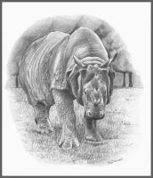 White Rhino by d3javu3