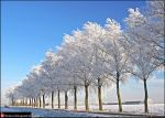 Winter in Holland XX by Betuwefotograaf