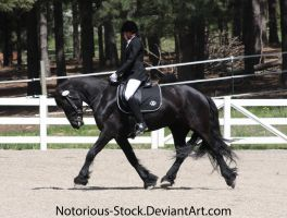 Dressage 007 by Notorious-Stock