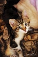 ..in the midst of many kittens by extraneous24