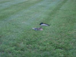 Now, don't get off my lawn, you two. by AudeS