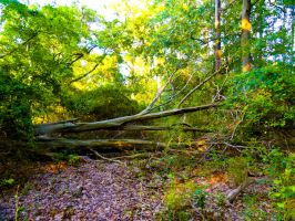 Fallen tree stock by stormymay888