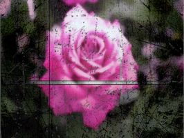 pink rose by deadrawflesh