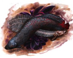 Arapaima - Illustration by LuxDani
