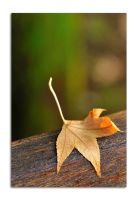 Fallen leaf by Naude