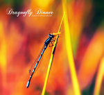 Dragonfly Dinner by chamathe