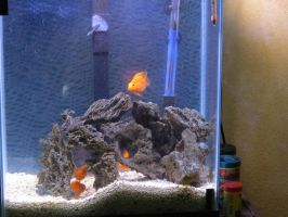 Fish Tank Stock - 1 by CNLGraphics