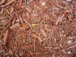 Wood Chips 3 by RosalineStock